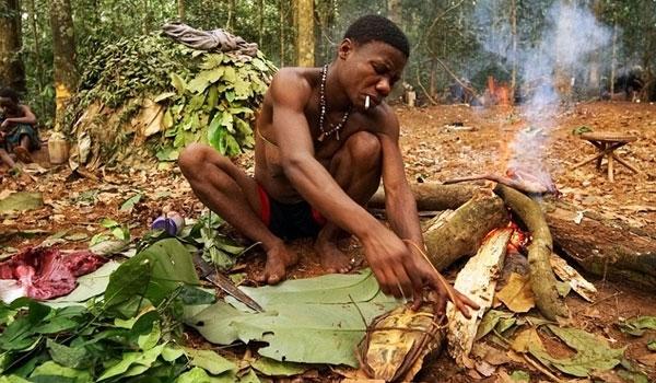 Họ thường sống sâu trong rừng rậm nhiệt đới tại châu Phi.