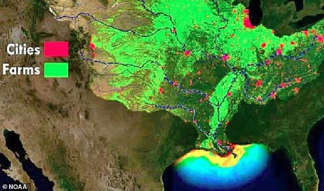 Lũ lụt lan rộng đã tạo ra một vùng chết lớn trên vịnh Mexico.