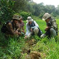 Tại sao dấu chân voi ảnh hưởng tới sự phát triển loài ếch?