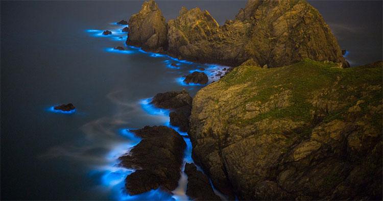 """Đẹp một cách ma quái và là tử thần của nhiều sinh vật biển, """"nước mắt xanh"""" khiến các nhà khoa học lo ngại."""
