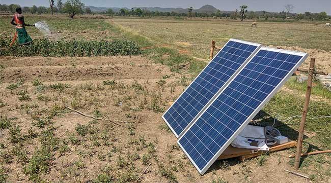 Người nông dân Ấn Độ tưới nước cho cây trồng.