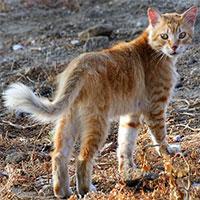 Các nhà khoa học vừa tìm ra loài mèo mới ở Địa Trung Hải với cái tên cực lạ