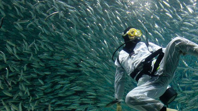 Nếu thấy cảnh đàn cá đang bơi tán loạn, ngay lập tức rời khỏi mặt nước nhé.