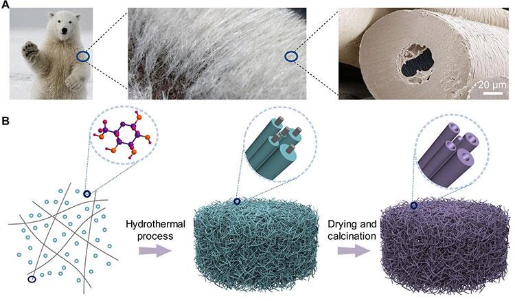 Chất liệu giữ nhiệt và cách nhiệt hiệu quả nhất thế giới mô phỏng cấu tạo lông gấu trắng Bắc cực