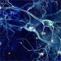 Phát hiện loại enzyme có thể giúp kéo dài sự sống
