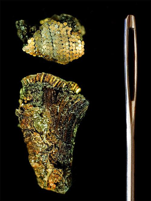 Phần chuôi dao gắn các hạt vàng tí hon đặt cạnh một cây kim.