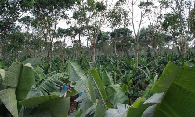 Cây xanh sẽ cải thiện chất lượng môi trường, làm tăng lượng mưa