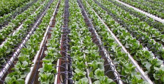 Tưới nhỏ giọt tối ưu hóa việc cung cấp nước cho cây trồng và độ ẩm cho đất