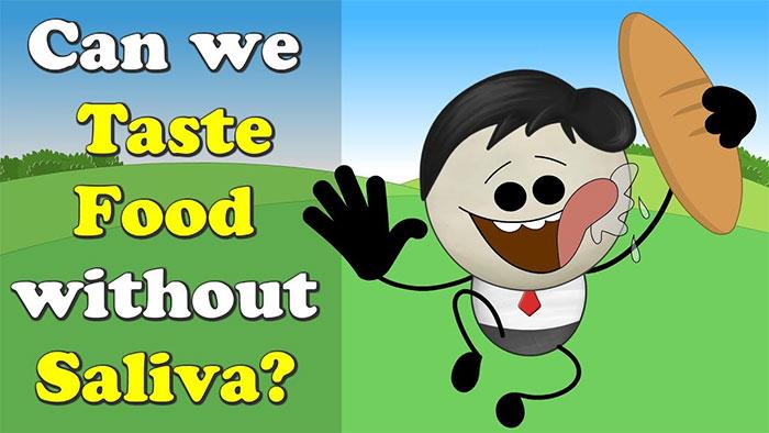 Vai trò quan trọng nhất của nước bọt là giúp việc nhai và tiêu hoá thức ăn trước khi nuốt.