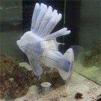 """Các nhà khoa học vừa tạo ra robot cá chạy bằng """"máu"""""""