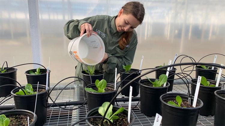 """Đất trồng sẽ trở nên """"màu mỡ"""" hơn khi có nhiều CO2."""