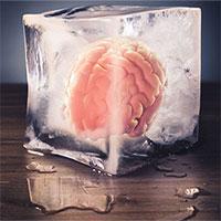 Bộ não của chúng ta nhớ đường về nhà như thế nào?
