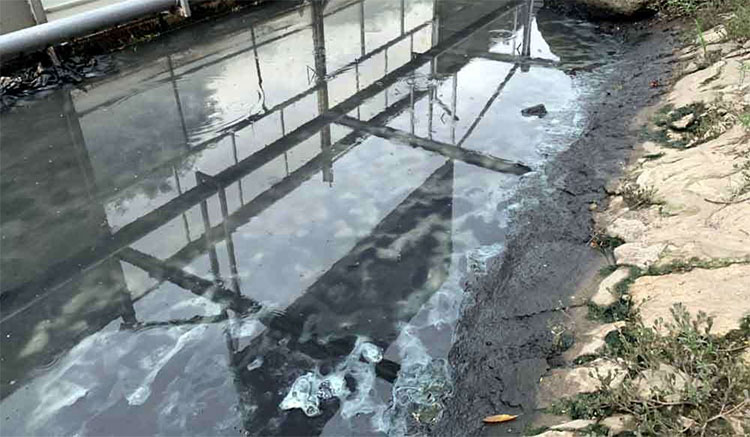 Khu vực trình diễn xử lý bùn 2 tuần sau khi áp dụng công nghệ.