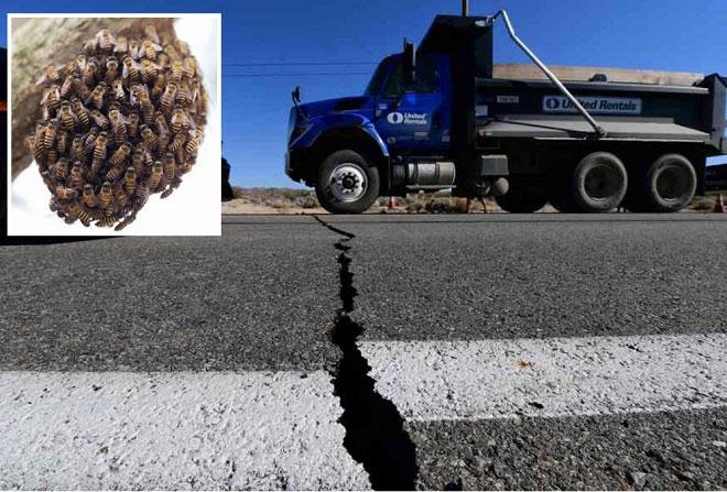 Động vật đã có dấu hiệu bất thường khi động đất xảy ra.