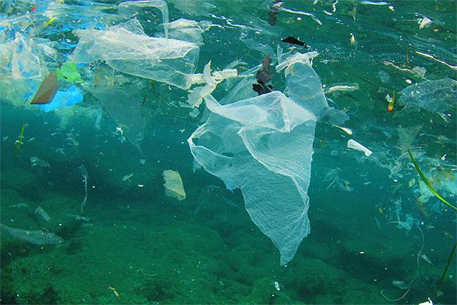 Hạt nhựa có mặt ở khắp mọi nơi.