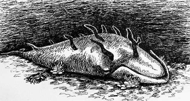 Một cái xác nằm lại đáy biển, nó sẽ trở thành một đại tiệc siêu to khổng lồ dành cho nhiều loài sinh vật biển khác.