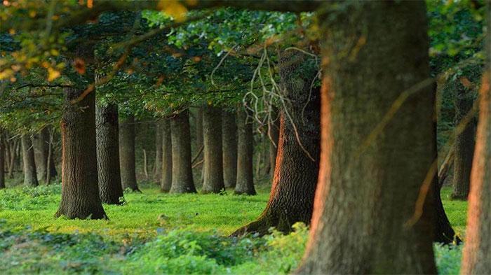 Các loài cây ưa nóng đã tăng trưởng mạnh và thậm chí còn xâm chiếm các lãnh địa mới
