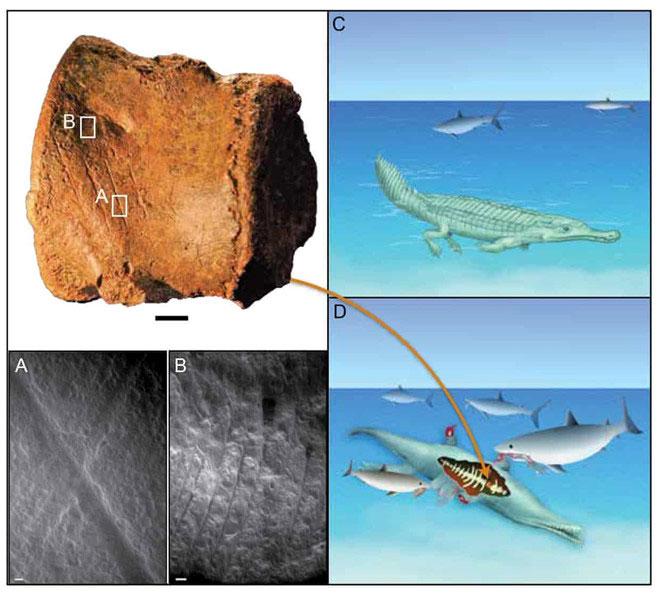 Các nhà khoa học đã tái tạo các loài vật tuyệt chủng từ các hóa thạch được tìm thấy ở sa mạc phía bắc Mali.