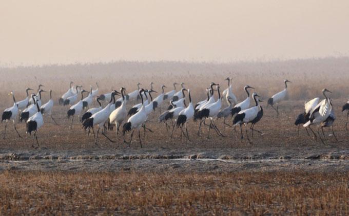 Khu bảo tồn chim di cư