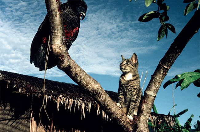Hơn 2 tỷ động vật bị giết mỗi năm bởi loài vật khá quen thuộc này.