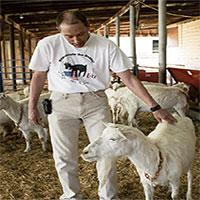 Chuyện lạ: Nuôi dê lai nhện, thu hoạch sữa dê chứa tơ nhện bán tiền tỷ