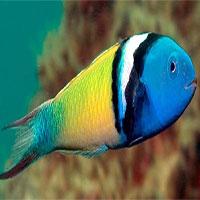 Nhà khoa học giải thích hiện tượng biến đổi giới tính ở cá