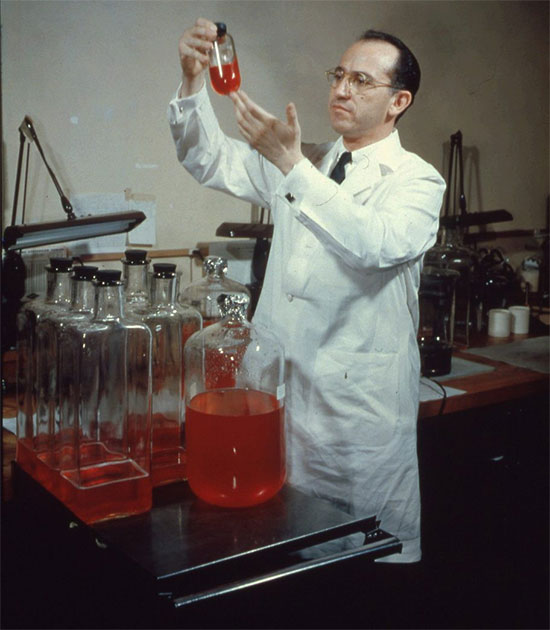 Jonas Salk trong quá trình nghiên cứu vaccine viêm tủy xám.