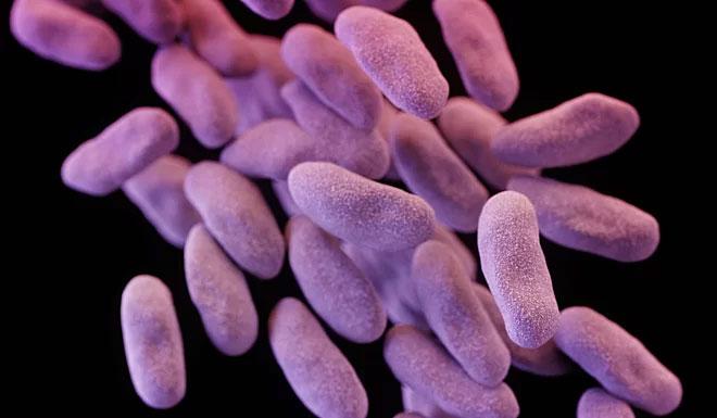 Các tế bào enterobacteriaceae kháng carbapenem.