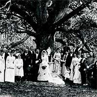 """Chuyện về cây sồi cổ thụ """"mai mối"""" cho 100 cặp tình nhân nhưng bản thân mãi cô đơn"""