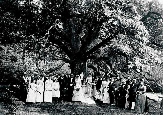 Một đám cưới dưới tán sồi kì diệu.
