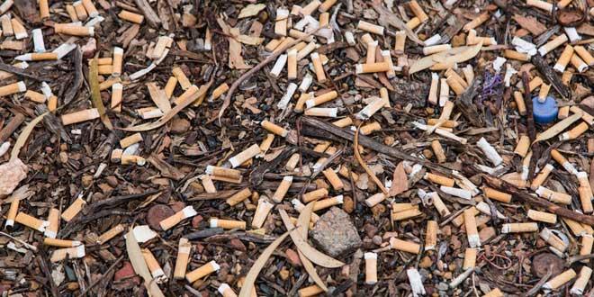 Mỗi năm loài người sản xuất khoảng 5,6 nghìn tỷ điếu thuốc.