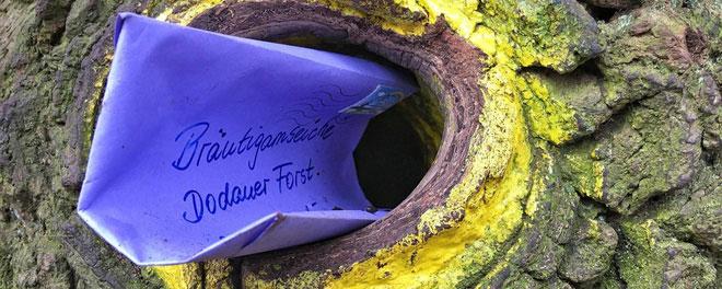 Một lá thư nằm trên hốc cây, chờ người thích hợp mở ra.