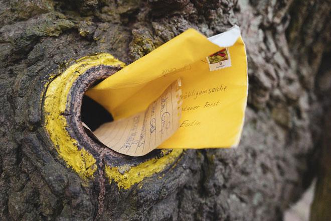Những cánh thư gửi vào hốc cây...