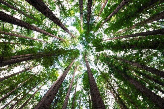 Trồng rừng là giải pháp đơn giản nhất để đối phó với biến đổi khí hậu.