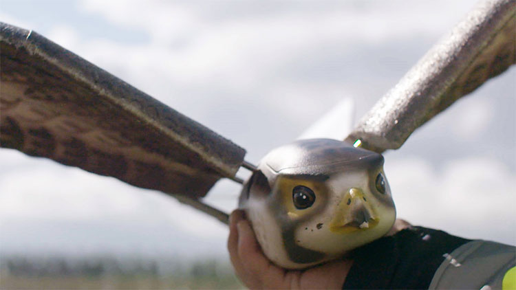 Robot chim