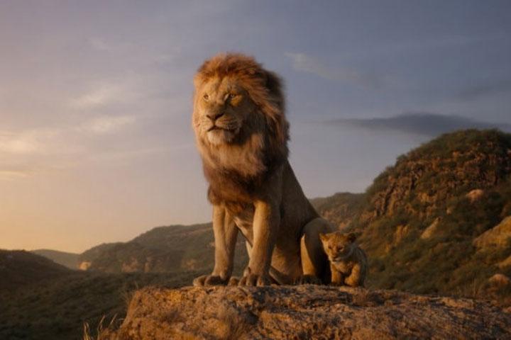 """Nhà động vật học: Phim """"The Lion King"""" mô tả hoàn toàn sai lầm vai trò sư tử đực trong thực tế - ảnh 1"""