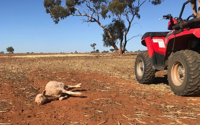 Australia trải qua nhiều đợt hạn hán khắc nghiệt trong những năm gần đây.