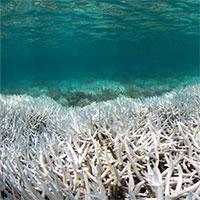 Thời tiết khắc nghiệt hủy diệt 50% hệ sinh thái biển Australia