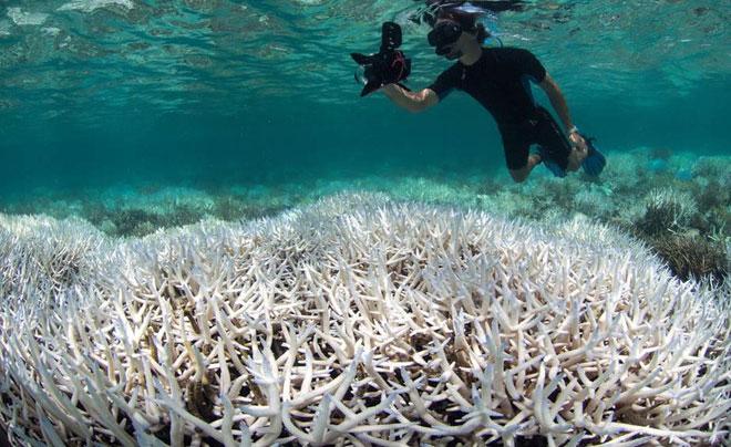 San hô chết trên diện rộng tại rặng san hô Great Barrier.