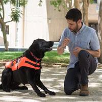 Tìm ra cách điều khiển chó mà không cần huýt sáo, vẫy tay hoặc ra khẩu lệnh