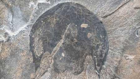 Một mẫu vật nguyên vẹn khác