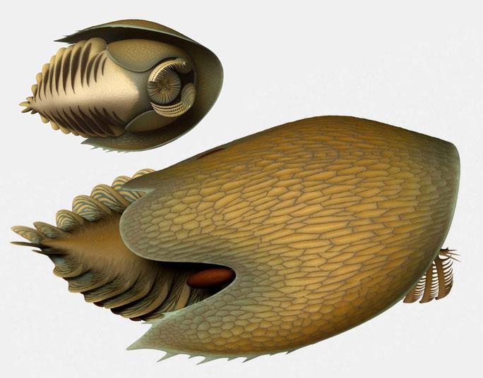 Chân dung quái vật 506 triệu tuổi được phục dựng