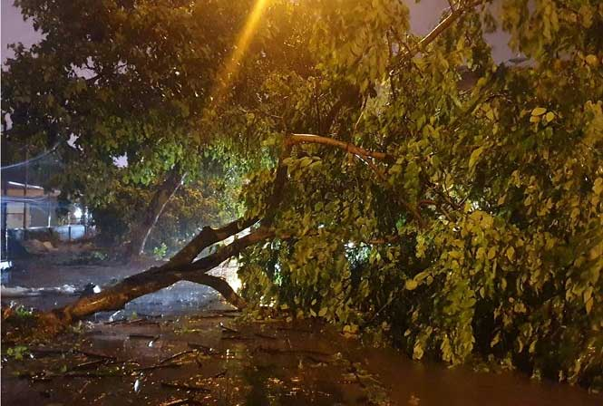 Bão làm đường phố ngập, cây đổ tại TP Móng Cái tối 2/8.