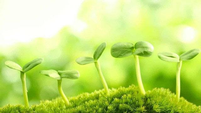 Mọi dưỡng chất đều bắt nguồn từ quang hợp.
