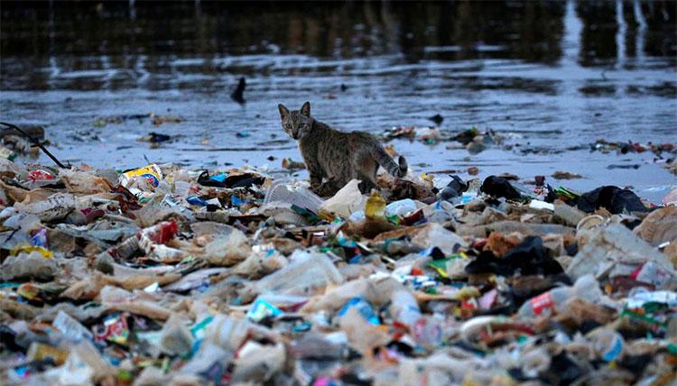 Một chú mèo đang bước đi trên bờ biển ngập rác ở Jakarta, Indonesia.