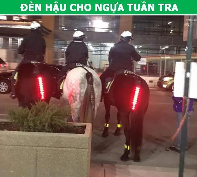 Đèn hậu cho ngựa tuần tra