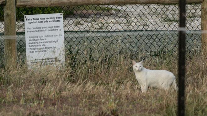 Con mèo sát thủ ở Mandurah