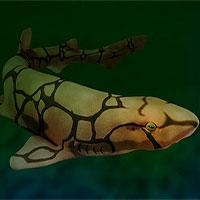 Những loài cá mập có khả năng phát ánh sáng xanh lá độc đáo