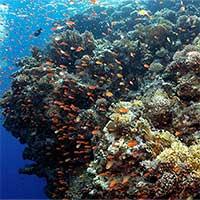 Nhiệt độ nước cao là một trong những yếu tố hủy hoại các rạn san hô
