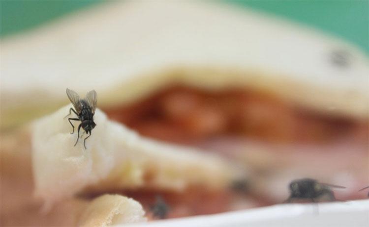 Loài ruồi